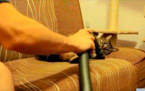 Cat Loves Being Vacuumed