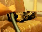 Cat Loves Being Vacuumed