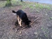 Dog Really Wants The Root