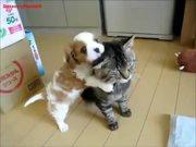 Patient Cat Is Patient
