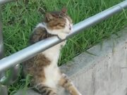 Worlds Most Relaxed Cat