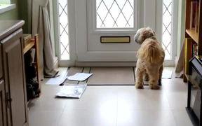 Dog Loves Mail Time