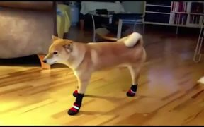 Dogs In Boots