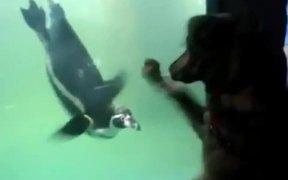 Dog Vs Penguin