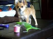 Puppy Vs Parrot