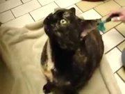 Posessed Evil Cat