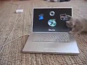 Kitten Vs Computer Screen