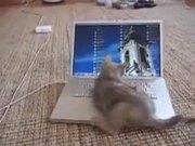 Kitten Vs Computer Screen
