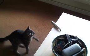 Cat Vs Razor