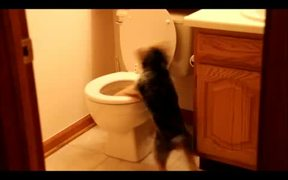 This Dog Hates Toilets