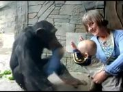 Chimp Hates Baby