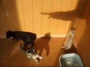 Kittens Vs Shadow