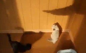 Kittens Vs Shadow