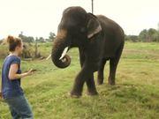 Elephant Smart Phone