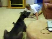 Giant Dog Playing