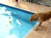 Dog Versus Pool