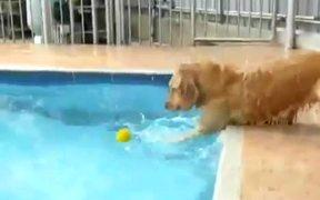 Dog Versus Pool