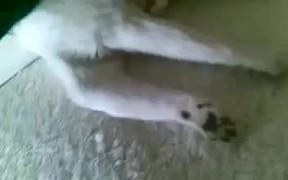 Ultra Passive Cat