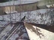 The Sledding Crow