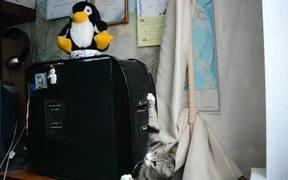 Cat Vs Disk Drive