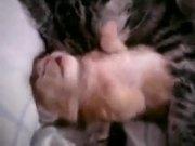 Kitten Bad Dreams
