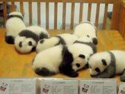 Crib Full Of Pandas