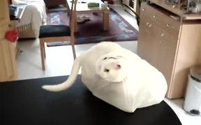 Cat Vs Plastic Bag