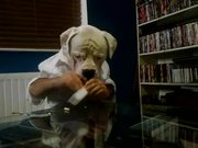 Dogman Dunking