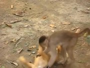 Monkey Playing With A Dog