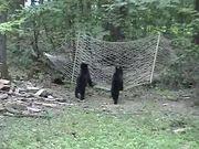 Bear Cubs Hammock