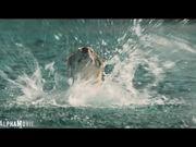 Alpha Trailer 2