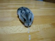 Hamster Vacuum