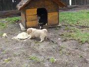 Puppy Food Defender