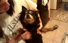 Dog From Hell