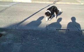 Dog Hates Shadows