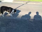 Dog Hates Shadows