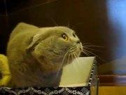 Cat Hates Books