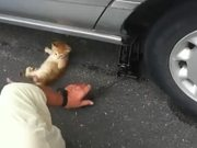 Kitty Mechanic