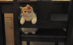 Kitten Loves The Chair