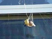 Spider Vs Wasp