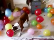 Dogs Birthday Present