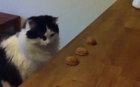 Cat Shells Game