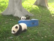 Pandas On Rocking Horses