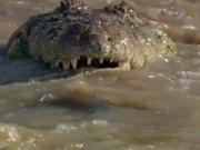 Lion Vs Croc
