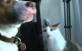 Cat Destroys Dog