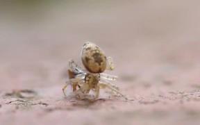 Spider Vs Ant