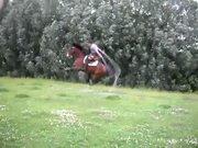 Jump Roping Horse