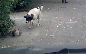 Sneaking Creeper Dog