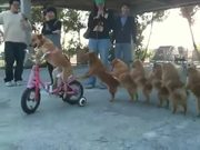 Dog Conga