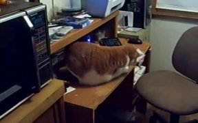 Card Catching Cat